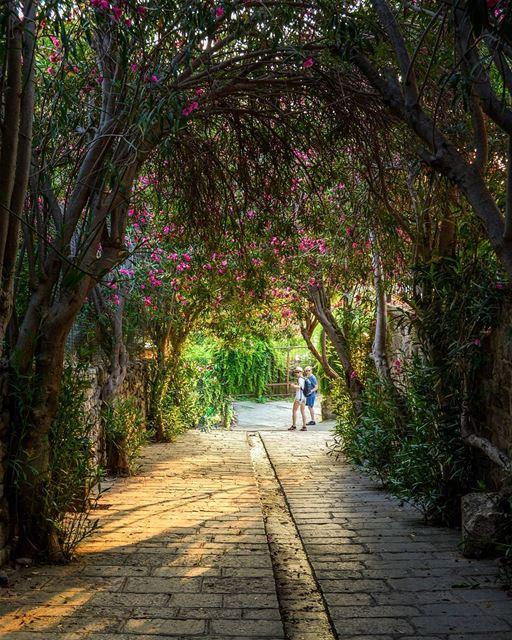 .The green Tunnel | Byblos, Lebanon. Best place to take a walk! Good... (Byblos, Lebanon)
